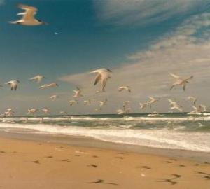 canaveral seashore 2 1998
