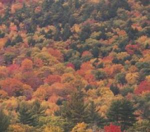 fall mountainside 1997