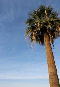 Flash Fiction prompt 015 leaning palm COMP
