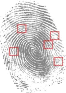 The Skinny on How Investigators Use DNA, Fingerprints in Solving ...