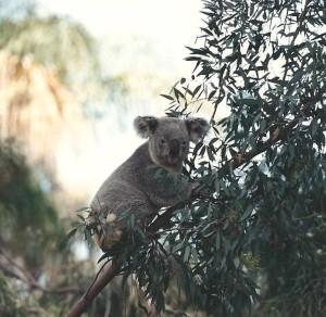 flash fiction writing prompt koala cali 1993