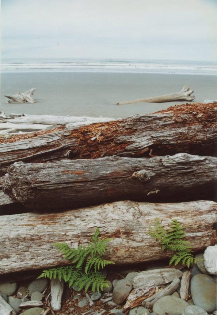 south beach olympic national park washington june 2001 flash fiction writing prompt copyright KS Brooks
