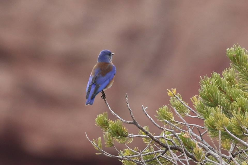 flash fiction prompt canyon de chelly 01180017 flash fiction writing prompt copyright ksbrooks