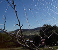 120px-Dew_drops_on_spider_web