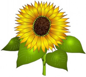 sunflower11th76j-300x269