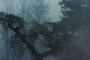 methuen library tree 1983