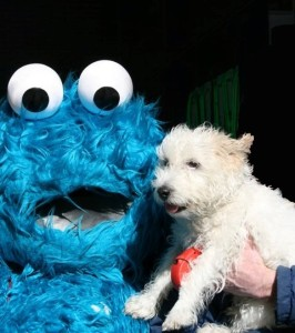 mr pish cookie monster copyright k.s. brooks. Do not use without attribution