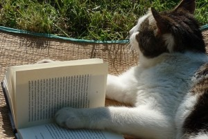 cat reading a print book