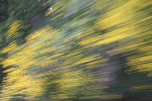 2014 May Day 2 Spanish Broom Flash Fiction Prompt