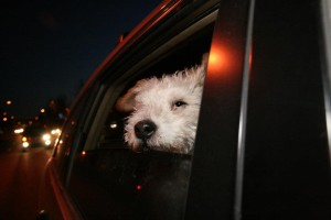 Mr Pish riding in the limo February 2013 Flash Fiction Writing Prompt