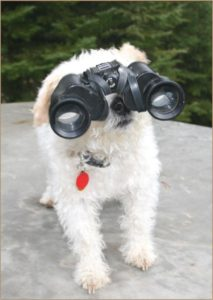 Mr Pish looking through binoculars in Mr Pish's Woodland Adventure