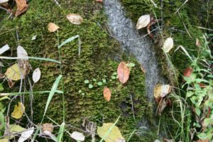 flash fiction writing prompt leaves-on-moss-colville-101213