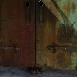 Dog Under Door