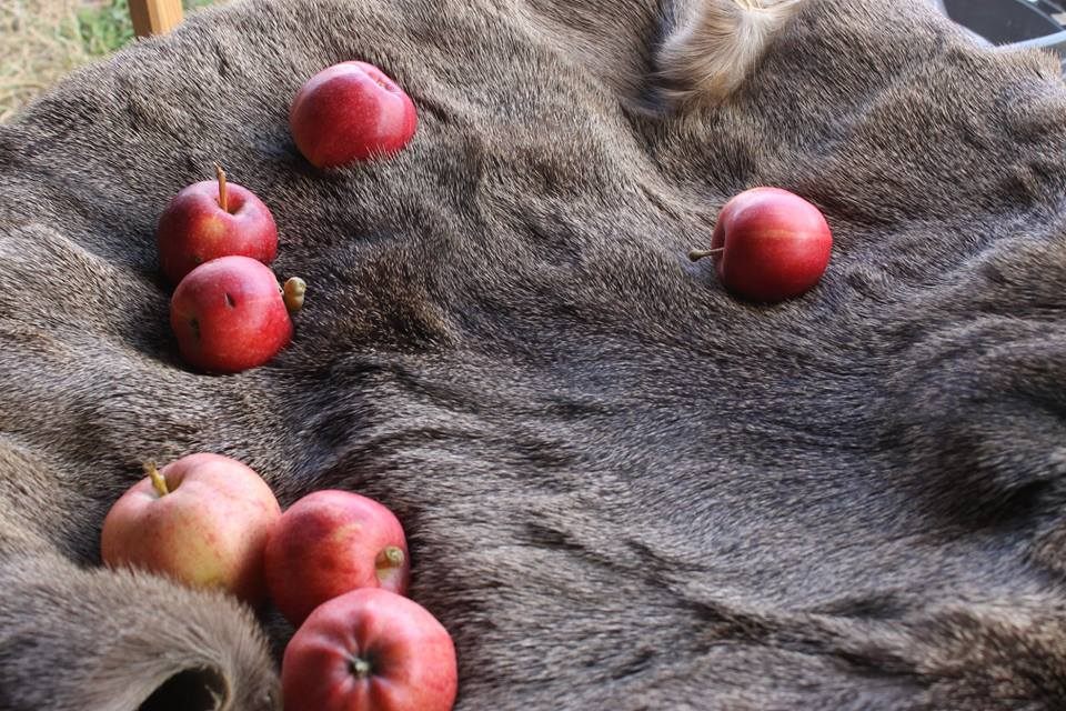 apples and fur spokane ren faire 2018 flash fiction prompt copyright K. S. Brooks