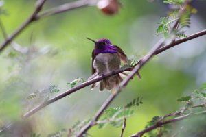 sonoran desert museum hummingbird feb 2017 tucson